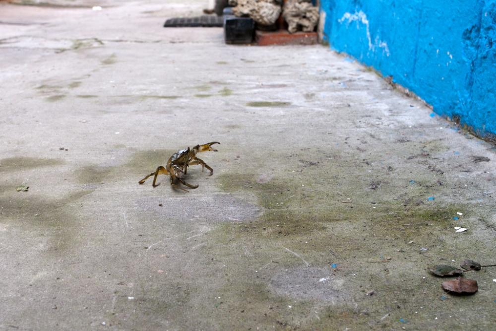 La fuga del granchio